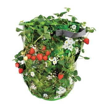 Ghiveci pentru căpșuni și ierburi aromatice Esschert Design Berry bonami.ro