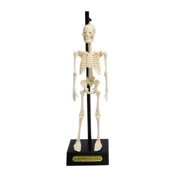 Mulaj schelet Rex London Anatomical bonami.ro