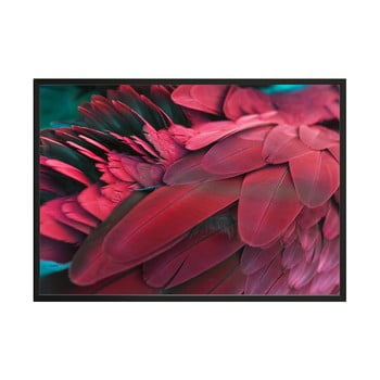 Poster DecoKing Feathers Red, 50 x 40 cm poza bonami.ro